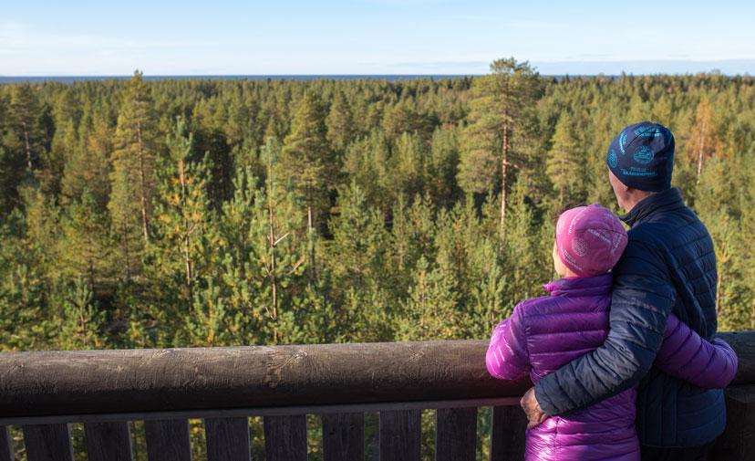 Aurinkoinen mäntyinen metsänäköala, jota pariskunta katselee