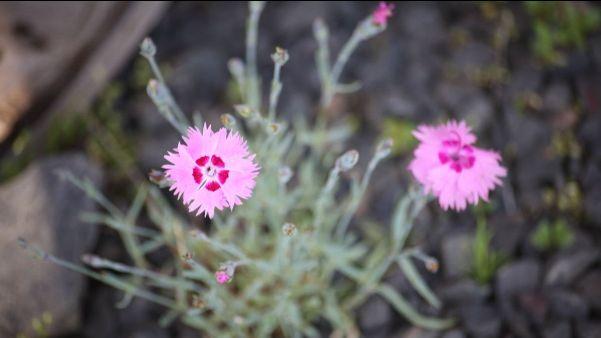 Kuva kukasta