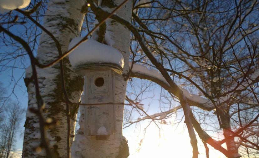 Linnunpönttö talvimaisemassa