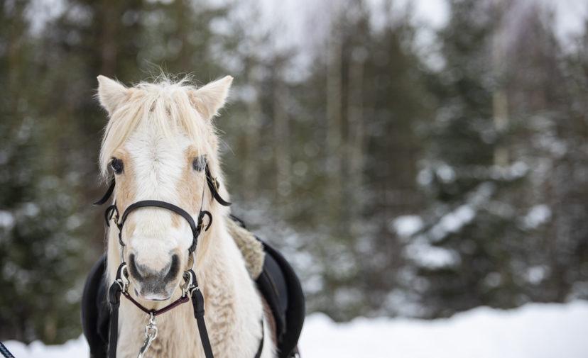 Vaalean ruskea hevonen